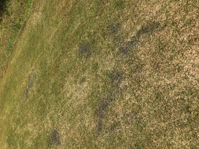 芝生の目土を撒いたところ